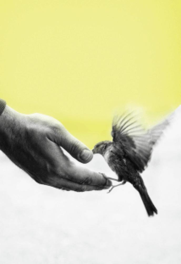 Liberdade e Livre-arbítrio
